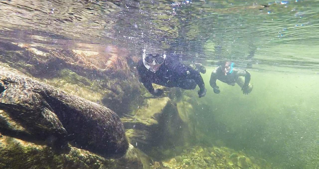 Snorkla i fjällen, Västerbotten