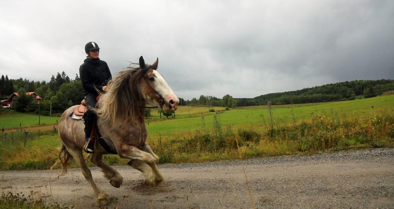 Erica Johansson galopperar med clydesdalehäst