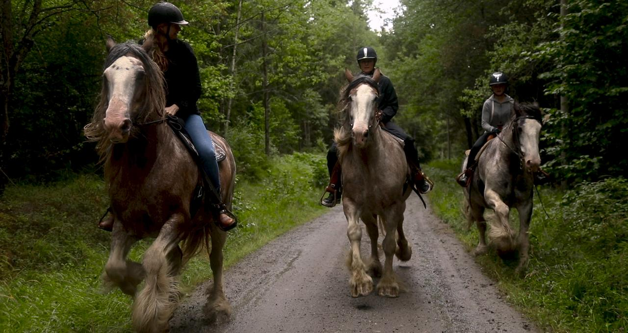 Rida Clydesdale-häst