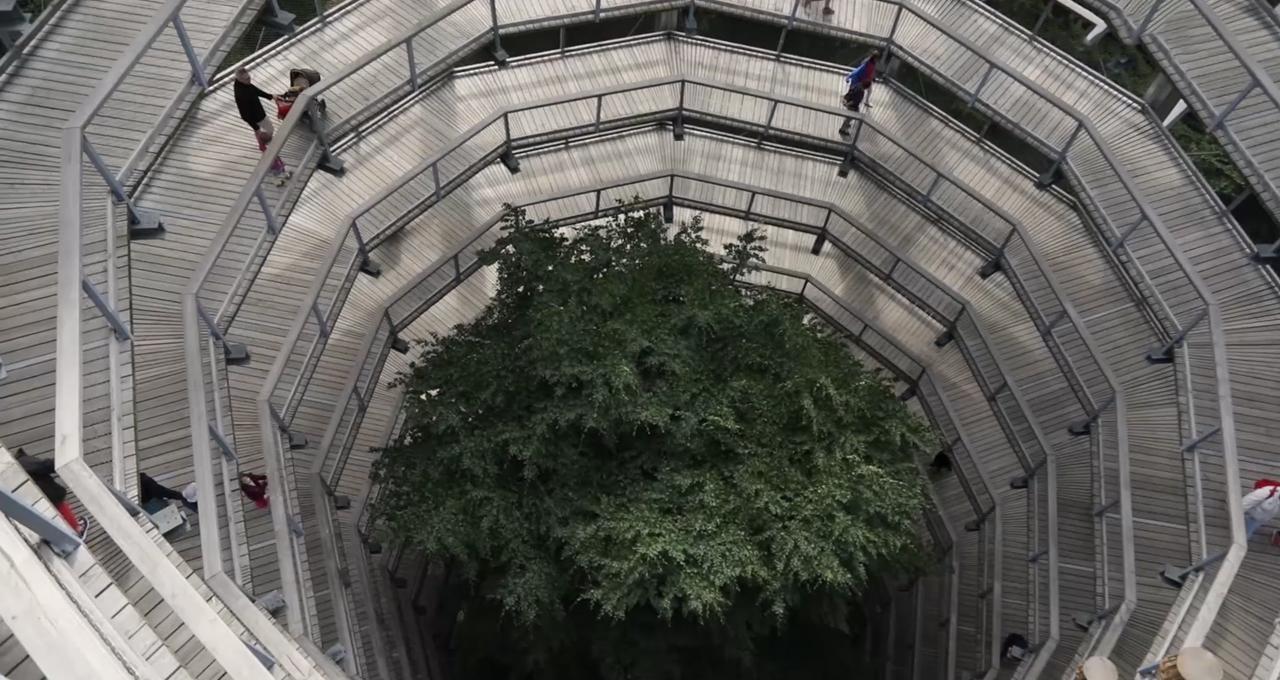 Naturprojekt Prora Tree Top Walk
