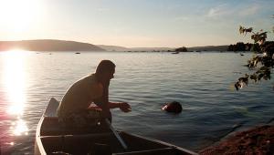 Meta i solnedgången Bromölla Camping